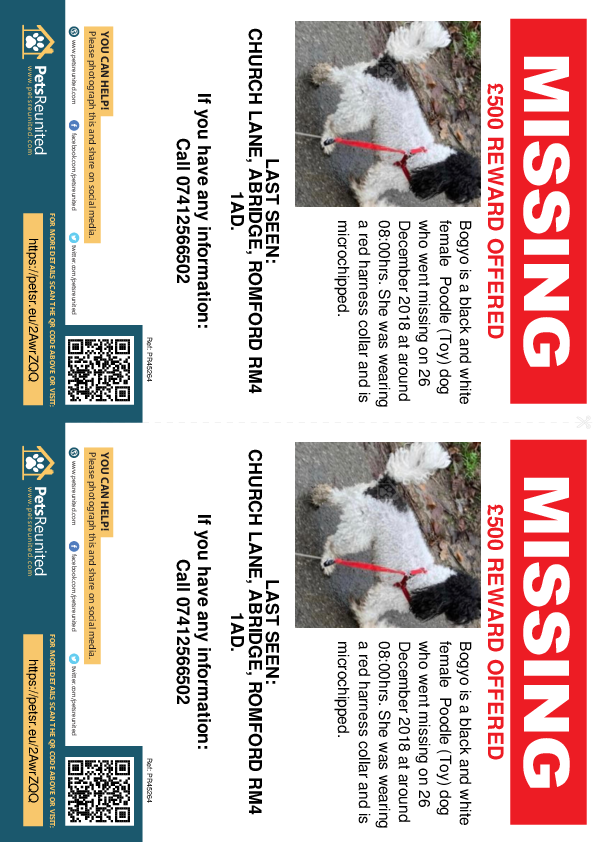 Lost pet flyers - Lost dog: Black and white Poodle (Toy) dog called Bogyo