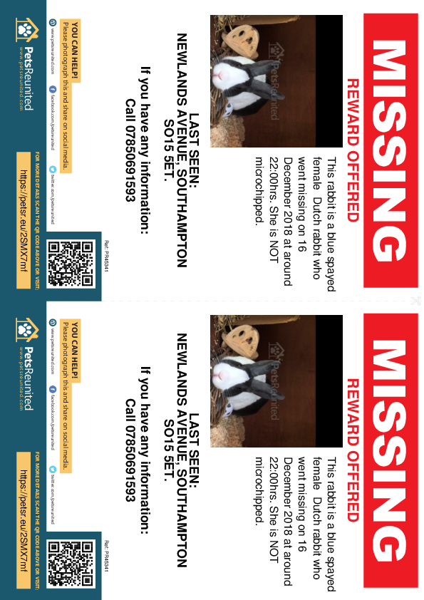 Lost pet flyers - Lost rabbit: Blue Dutch rabbit [name witheld]