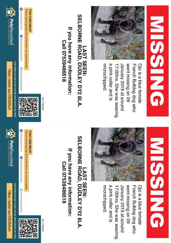 Lost pet flyers - Lost dog: Blue French Bulldog dog called Ojo