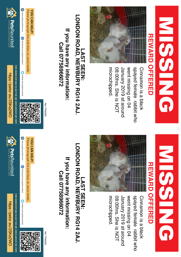 Lost pet flyers - Lost rabbit: White and brown rabbit called Cinnamon