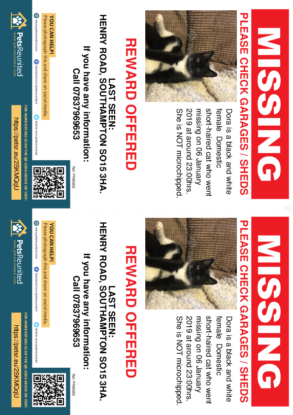 Lost pet flyers - Lost cat: Black and white cat called Dora