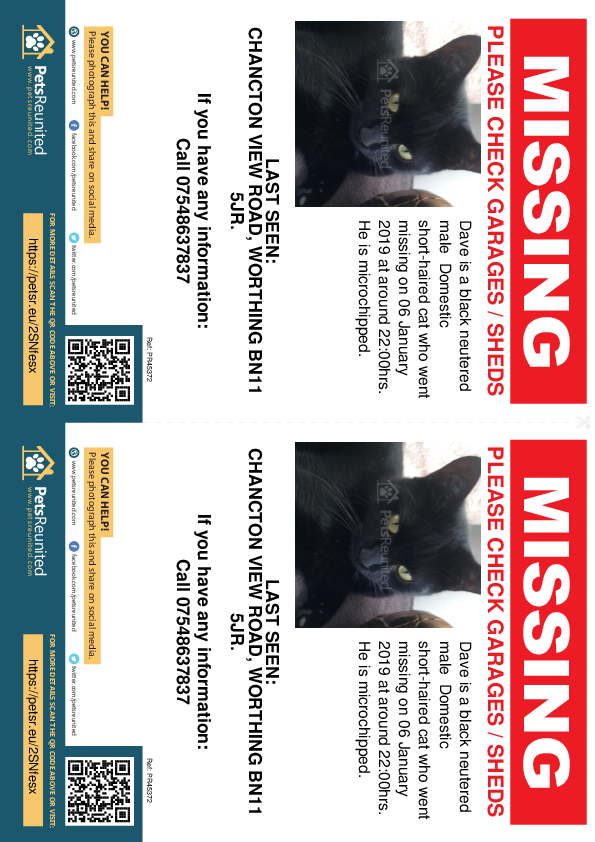 Lost pet flyers - Lost cat: Black cat called Dave