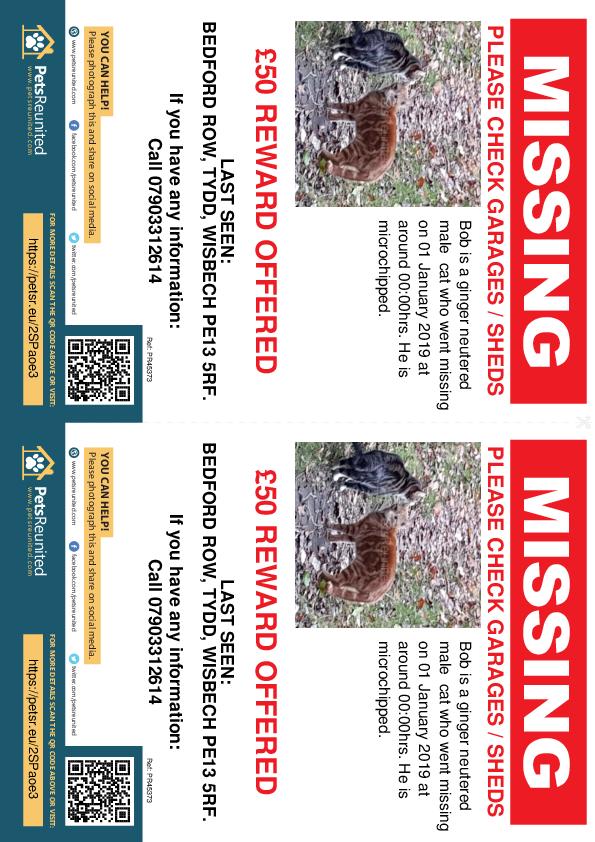 Lost pet flyers - Lost cat: Ginger cat called Bob