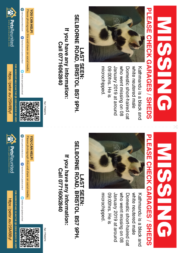 Lost pet flyers - Lost cat: Black and white cat called Kathmandu