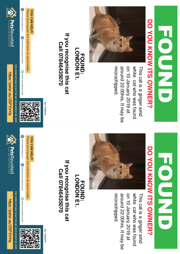Found pet flyers - Found cat: Ginger amd white cat