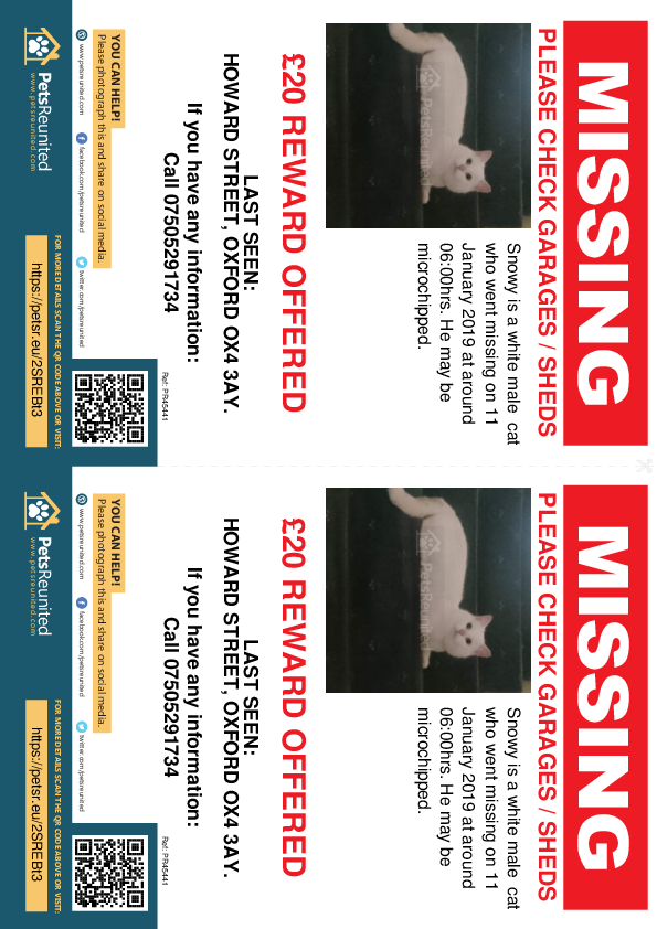 Lost pet flyers - Lost cat: White cat called Snowy