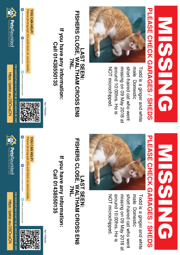 Lost pet flyers - Lost cat: Ginger and white cat called Todd