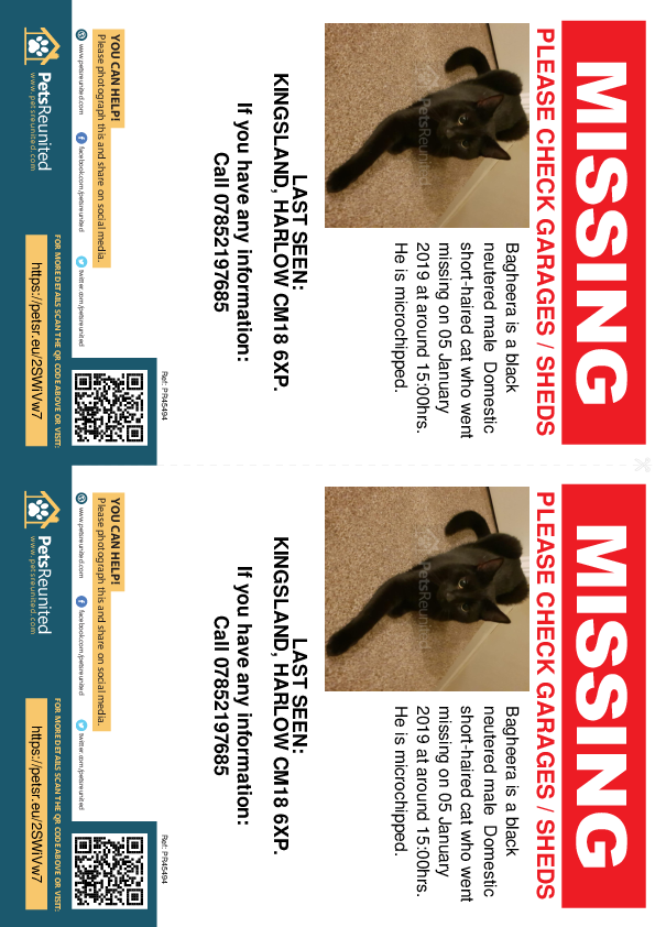 Lost pet flyers - Lost cat: Black cat called Bagheera