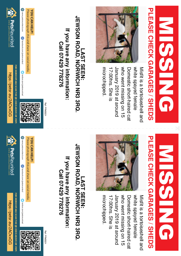 Lost pet flyers - Lost cat: Tortoiseshell and white cat called Misfit