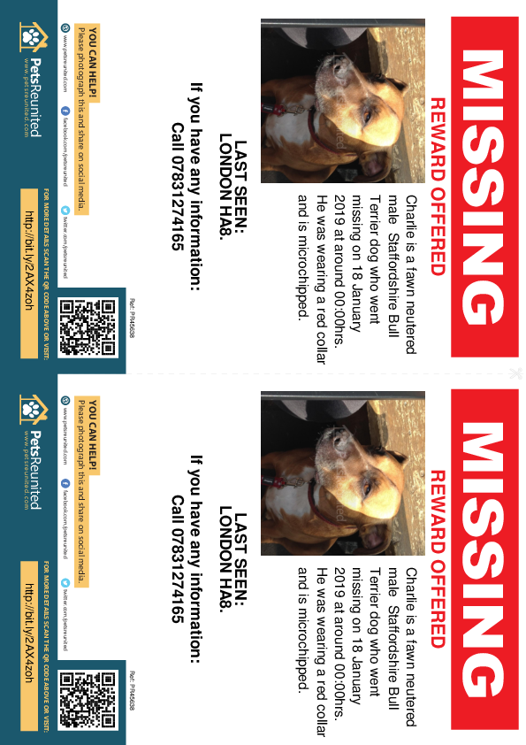 Lost pet flyers - Lost dog: Fawn Staffordshire Bull Terrier dog called Charlie