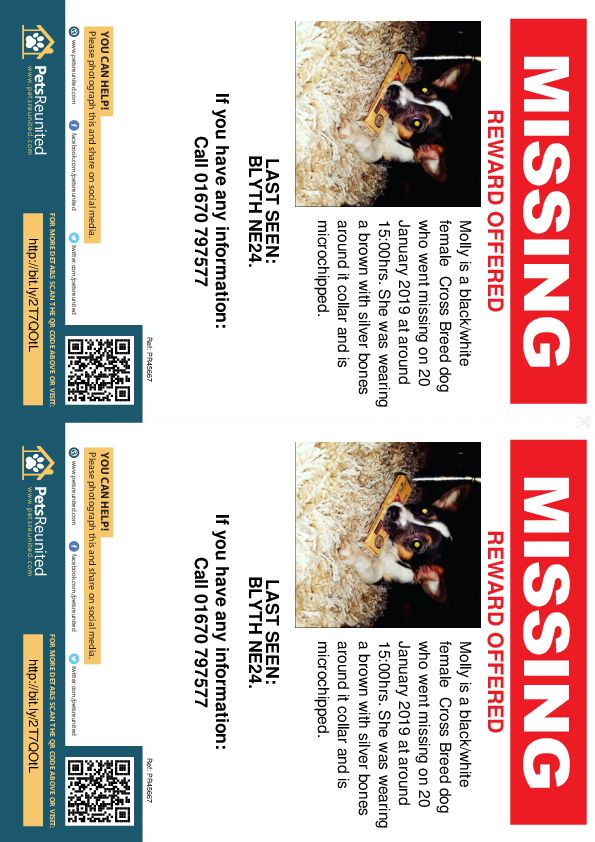 Lost pet flyers - Lost dog: Black/White dog called Molly