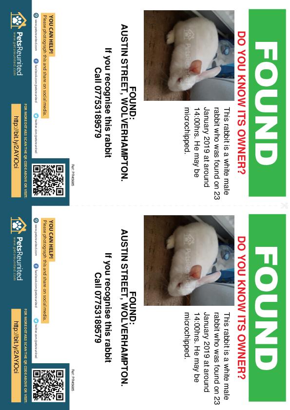 Found pet flyers - Found rabbit: White rabbit