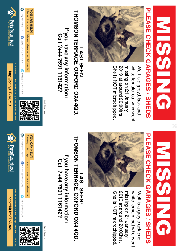 Lost pet flyers - Lost cat: Grey,black and white cat called Wolf
