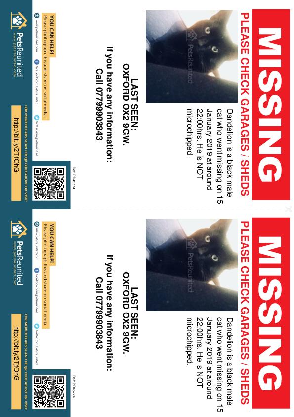 Lost pet flyers - Lost cat: Black cat called Dandelion