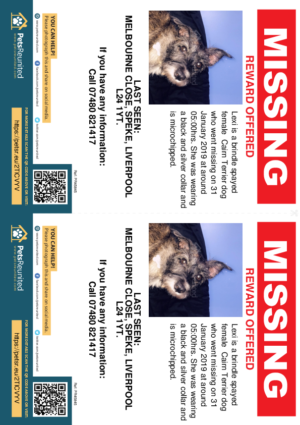 Lost pet flyers - Lost dog: Brindle Cairn Terrier dog called Lexi