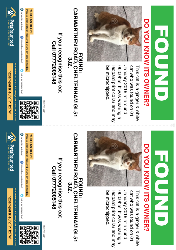 Found pet flyers - Found cat: Ginger & White cat