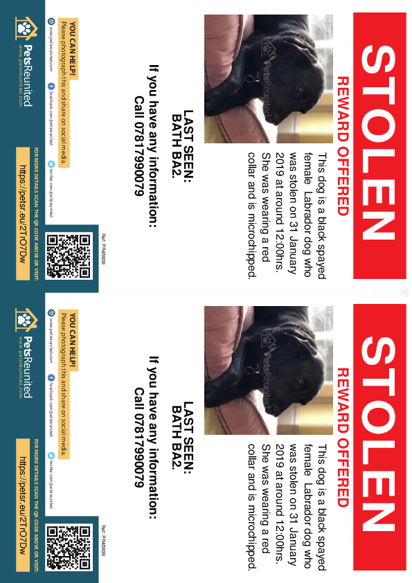 Stolen pet flyers - Stolen dog: Black Labrador dog [name witheld]