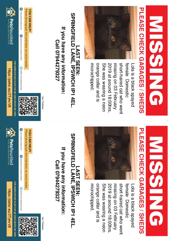 Lost pet flyers - Lost cat: Black cat called Lola