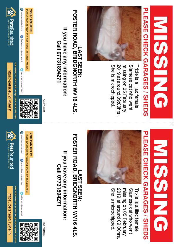 Lost pet flyers - Lost cat: Lilac Siamese cat called Trixie