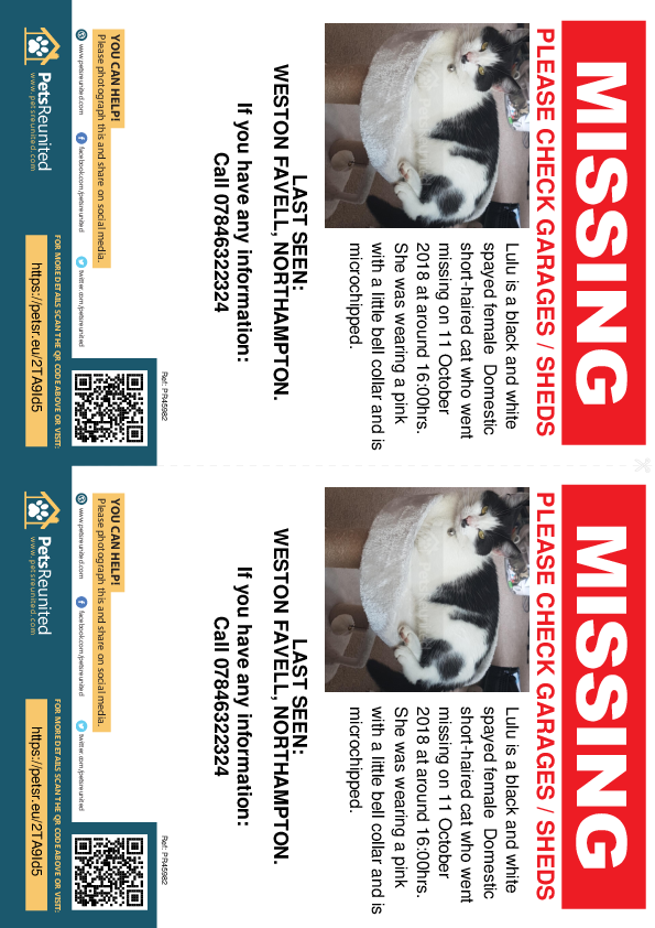 Lost pet flyers - Lost cat: Black and white cat called Lulu