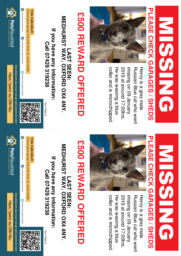 Lost pet flyers - Lost cat: Grey Russian Blue cat called Henry