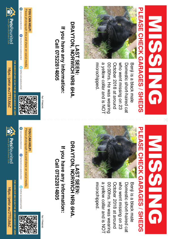 Lost pet flyers - Lost cat: Black cat called Benji