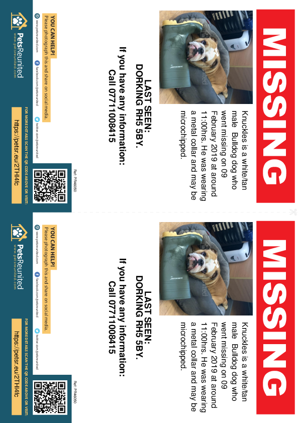 Lost pet flyers - Lost dog: White/tan Bulldog dog called Knuckles