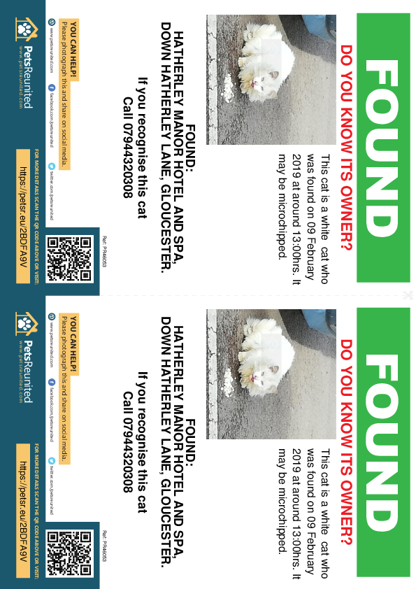 Found pet flyers - Found cat: White cat