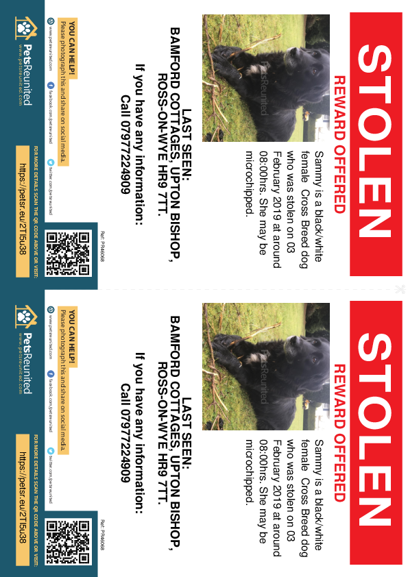 Stolen pet flyers - Stolen dog: Black/White dog called Sammy