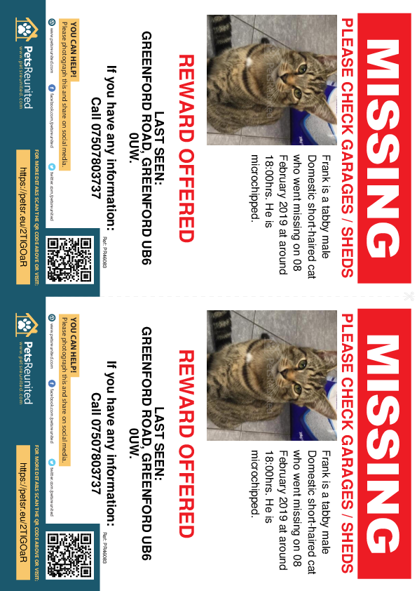 Lost pet flyers - Lost cat: Tabby cat called Frank