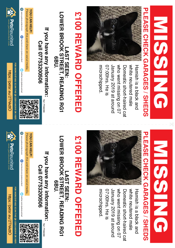 Lost pet flyers - Lost cat: Black and white cat called Hamish