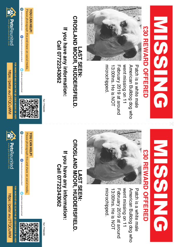 Lost pet flyers - Lost dog: White American Bulldog dog called Patch