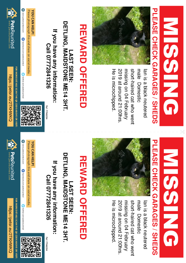Lost pet flyers - Lost cat: Black cat called Ian