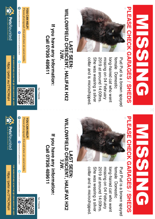 Lost pet flyers - Lost cat: Brown cat called Pud Pud