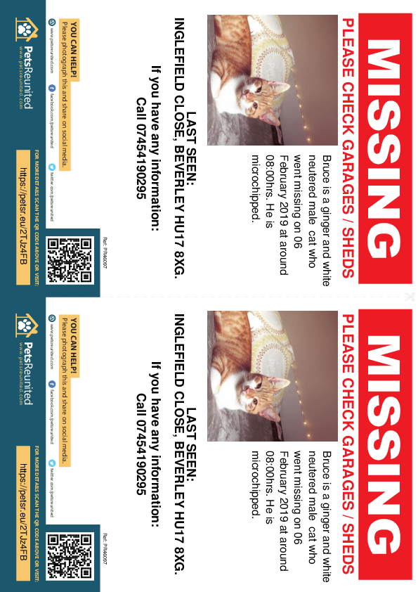 Lost pet flyers - Lost cat: Ginger and white cat called Bruce