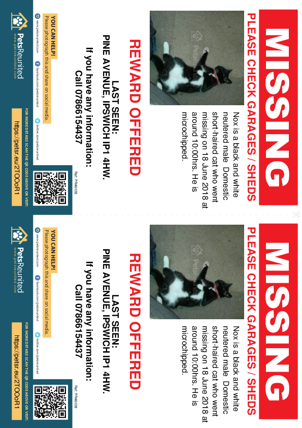 Lost pet flyers - Lost cat: Black and white cat called Nox