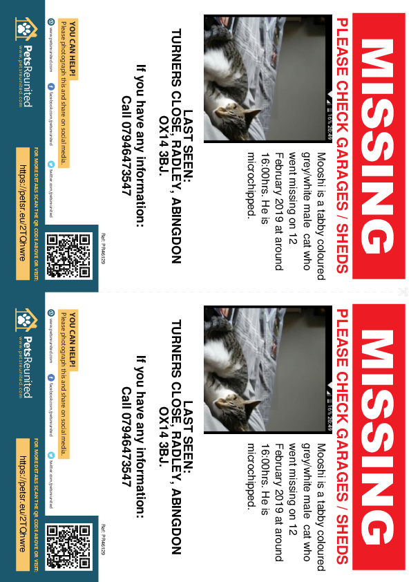 Lost pet flyers - Lost cat: Tabby coloured grey/white cat called Mooshi