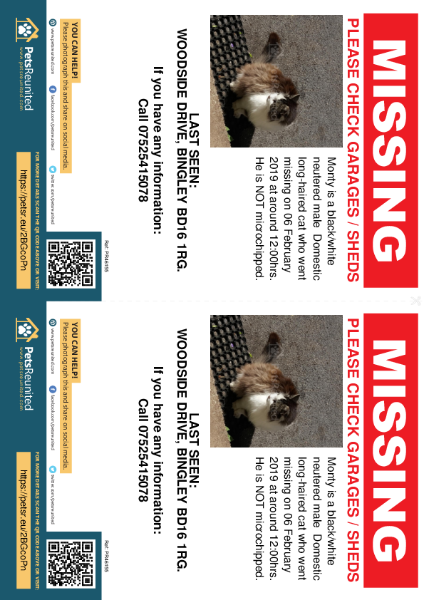 Lost pet flyers - Lost cat: Black/White cat called Monty