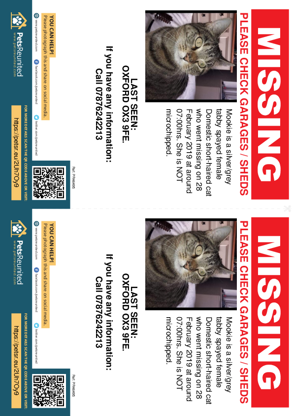 Lost pet flyers - Lost cat: Silver/Grey Tabby cat called Mookie