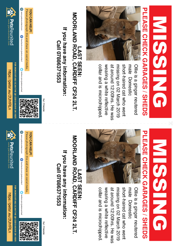 Lost pet flyers - Lost cat: Ginger cat called Ollie