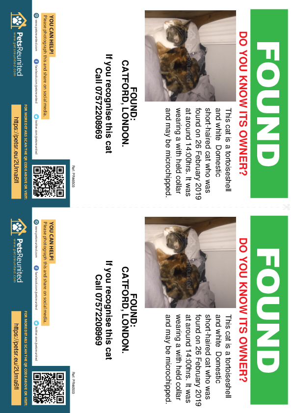 Found pet flyers - Found cat: Tortoiseshell and white cat