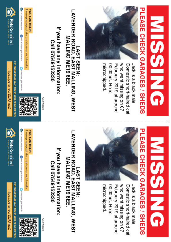 Lost pet flyers - Lost cat: Black cat called Jack
