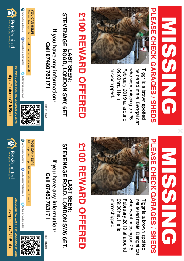 Lost pet flyers - Lost cat: Brown Spotted Bengal cat called Tiggr