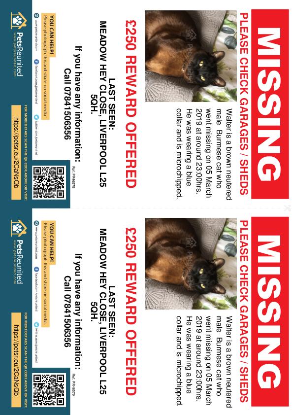 Lost pet flyers - Lost cat: Brown Burmese cat called Walter