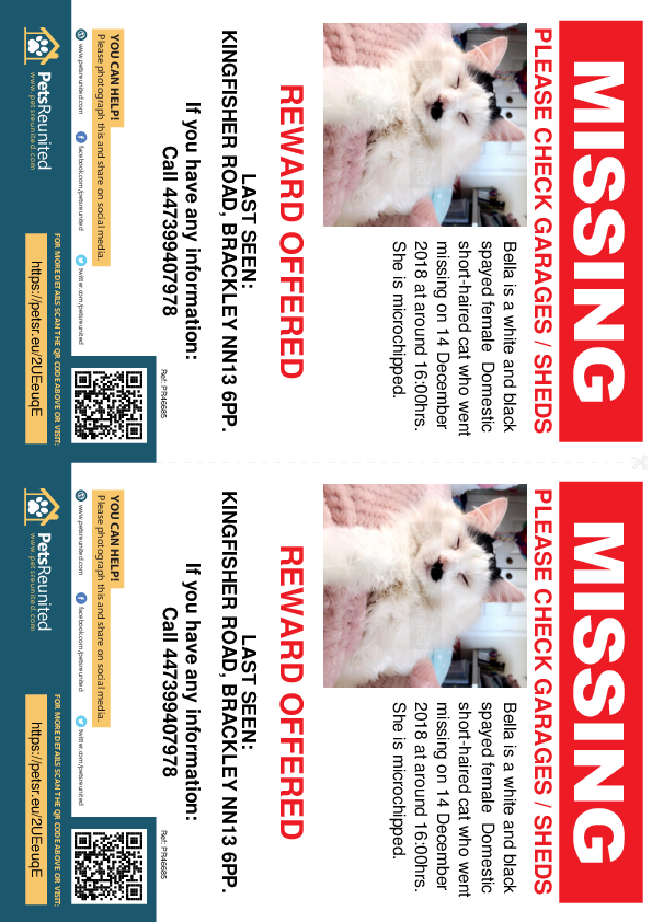 Lost pet flyers - Lost cat: White and Black cat called Bella