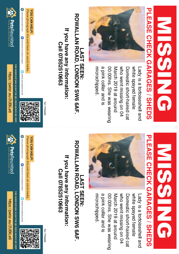 Lost pet flyers - Lost cat: Tortoiseshell and white cat called Lady
