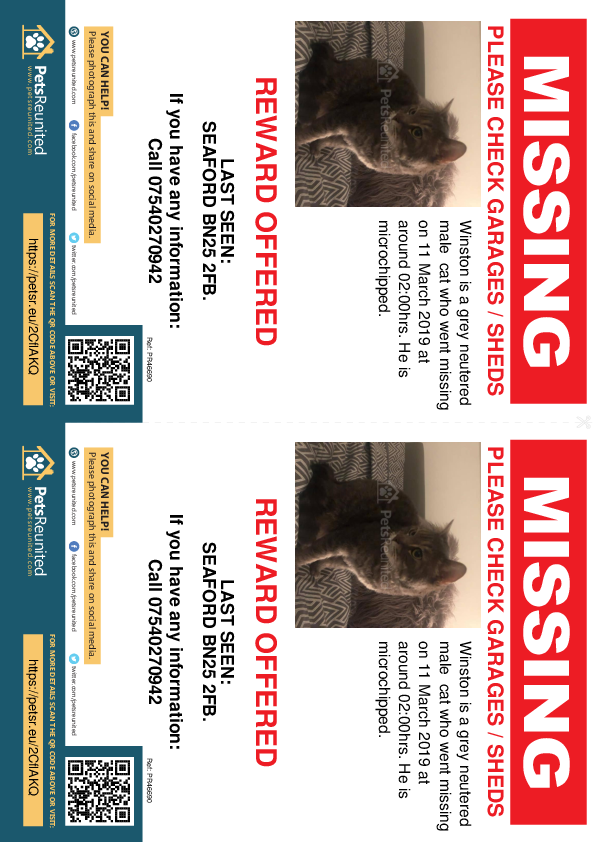 Lost pet flyers - Lost cat: Grey cat called Winston