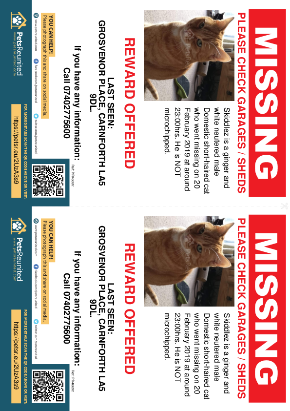 Lost pet flyers - Lost cat: Ginger and white cat called Skiddlez