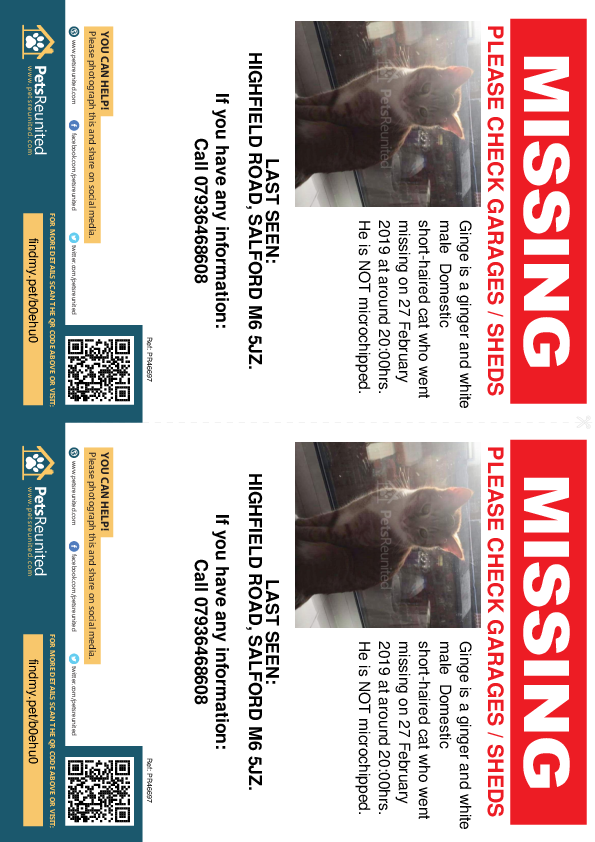 Lost pet flyers - Lost cat: Ginger and white cat called Ginge