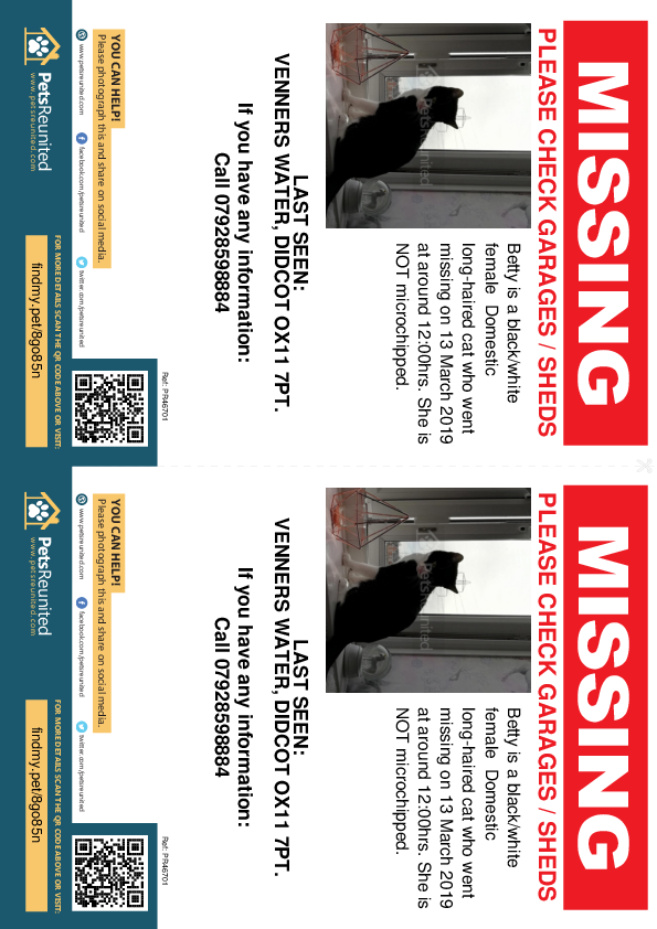Lost pet flyers - Lost cat: Black/White cat called Betty
